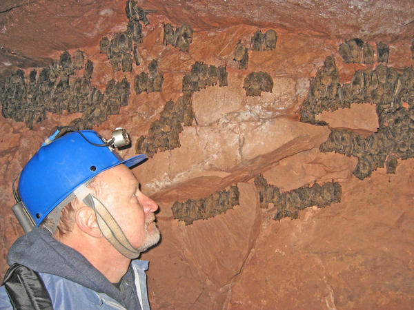 Bat researcher Allen Kurta surveys bats.