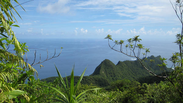 A view of the lush Samoan vegetation in American Samoa, Tutuila Island.