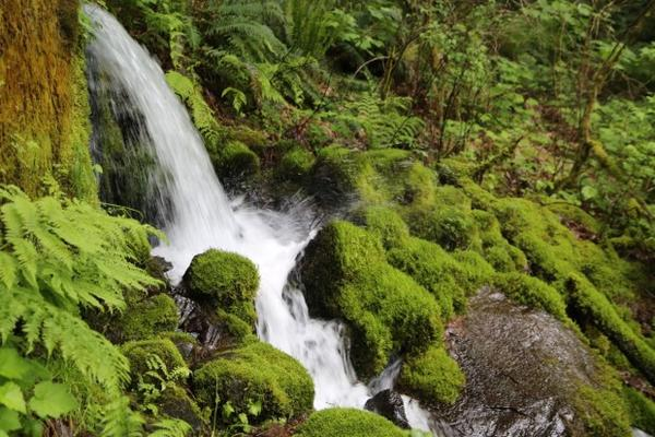 <p>A measure on this month's ballot allows voters in Hood River County to block a proposal to bottle water from Oxbow Springs in Cascade Locks.</p>