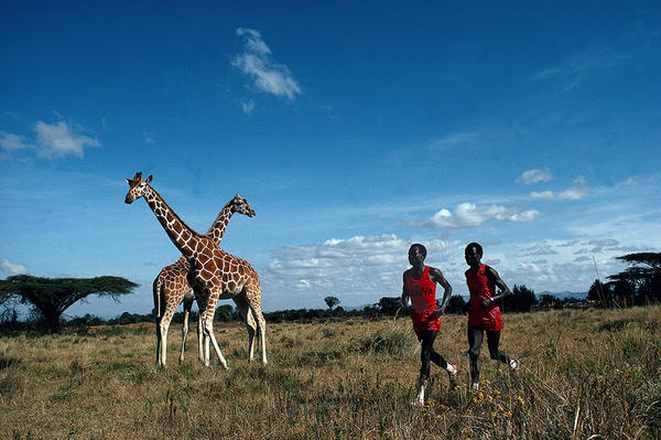 Kenyan marathon runners Kipkoech and Charles Cheruiyot run past giraffes in Leifer's 1984 scenic portrait. Nanyuki, Kenya 1984. Photo from <em>Relentless: The Stories behind the Photographs,</em> by Neil Leifer with Diane K. Shah (University of Texas Press, 2016)
