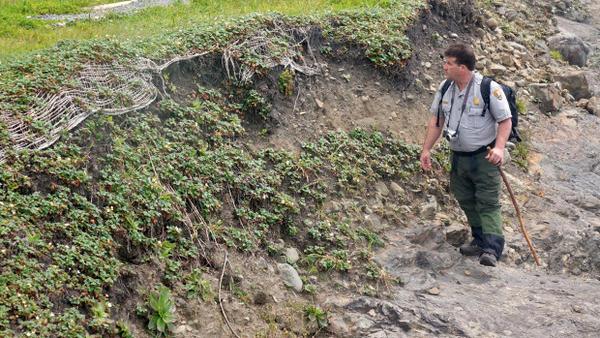 <p>Redwood National Park Archeologist Michael Peterson surveys a stretch of eroding cliff.</p>