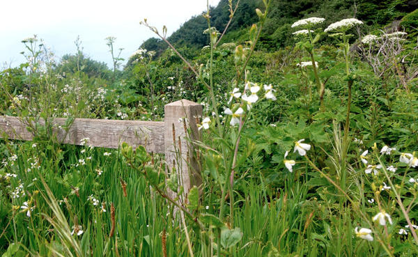 <p>A new fence has helped keep visitors on trail and out of erosion prone areas.</p>