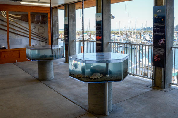 A fisheries exhibit at the new Marine Life Center overlooking the Charleston boat basin.