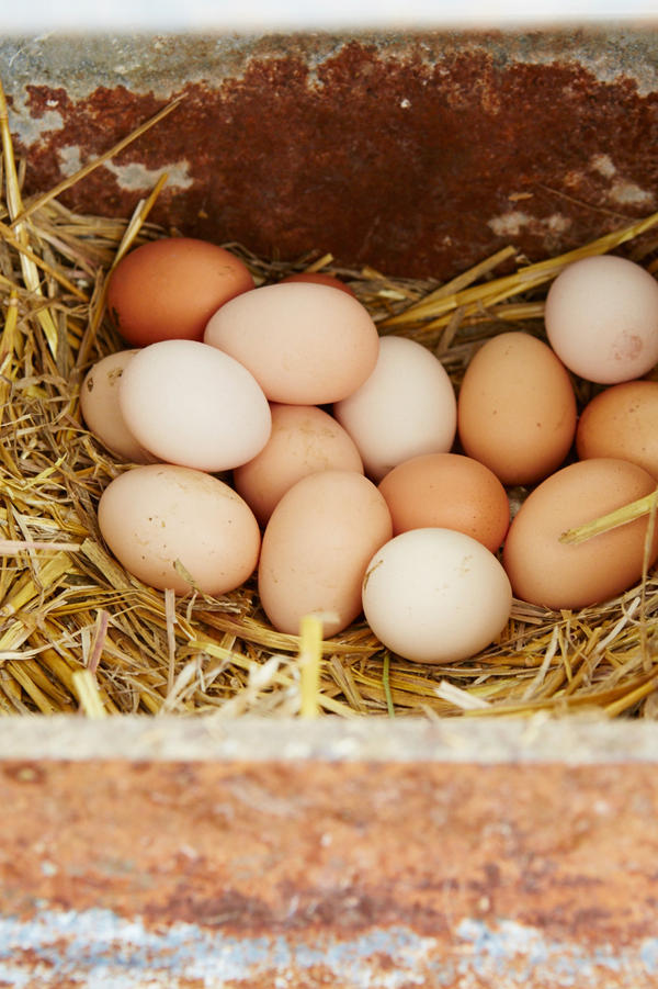 Eggs from Locally Laid