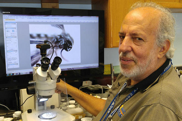 At the Broward County Mosquito Control office in Pembroke Pines, biologist Evaristo Miqueli looks at the Aedes aegypti mosquito under a microscope.