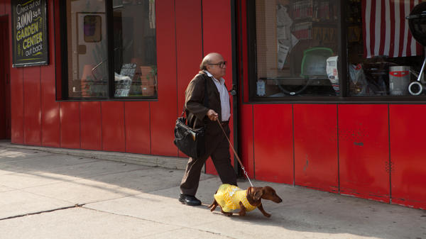 Dave (Danny DeVito) in <em>Wiener-Dog. </em>