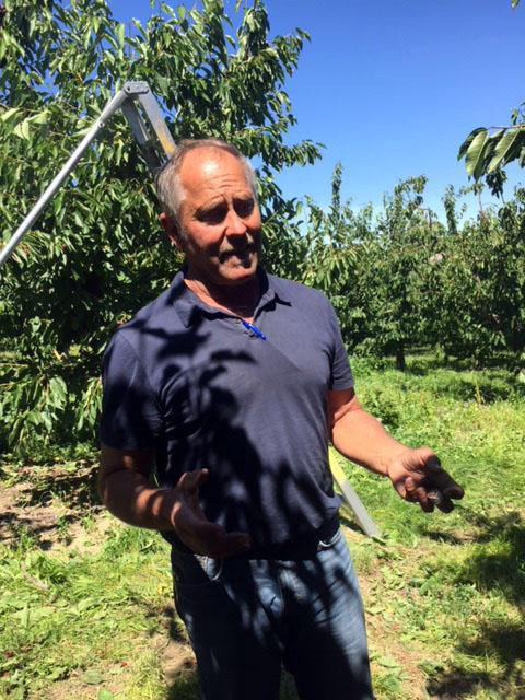 Fourth-generation Yakima Valley farmer Mark Roy has been growing cherries since 1980 near Moxee, Washington.