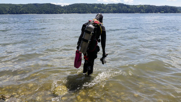 <p>Portland diver Callie Renfro's May2016 sighting of a sixgill shark in Washington's Hood Canal was one of several such incidents, fueling speculation that the giant shark may be repopulating Puget Sound.</p>