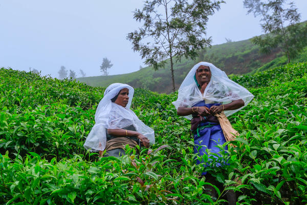 """Tea leaf pickers in the Indian tea industry are nearly all women, and in the southern tea-growing state of Kerala, they earn the lowest daily minimum wage of any sector in the state. They work six days a week rain or shine. But J. Rajeshwari (right) helped mobilize the female worforce. """"We couldn't feed ourselves or educate our children, so we organized,"""" she says."""