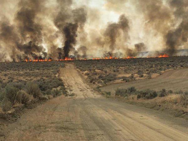 Brush, grass and sage served as fuel for the Douglas County Complex fire in 2015.
