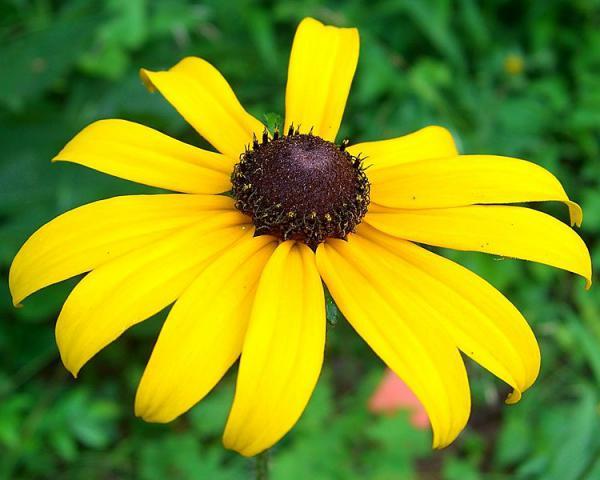 field notes flowers the fibonacci sequence yellowstone public