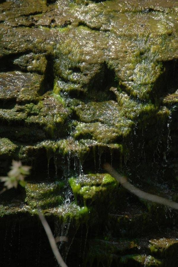 Moss on Rocks at Jackson Falls / Mann's Creek in the Town of Aurora. The Western New York Land Conservancy is raising funds to preserve the land.