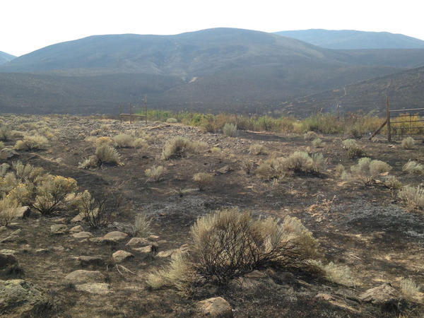 Significant portions of the Hanford Reach National Monument including Rattlesnake Mountain and the Arid Lands Ecology Reserve were burned up in the Range 12 Fire this week.