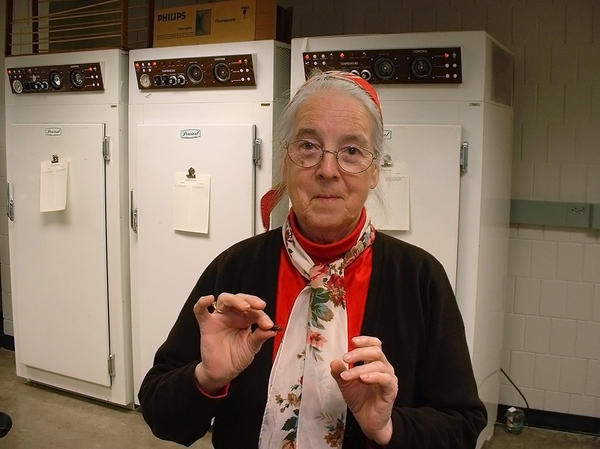 Professor Barbara Stay discovered that the liquid from a mother cockroach crystallizes in the guts of its babies.