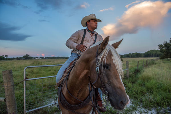 Cattle work at the Seminole Tribe of Florida's Big Cypress Reservation.