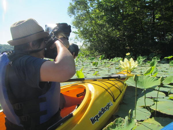 Jane Kramer photographing the American lotus.