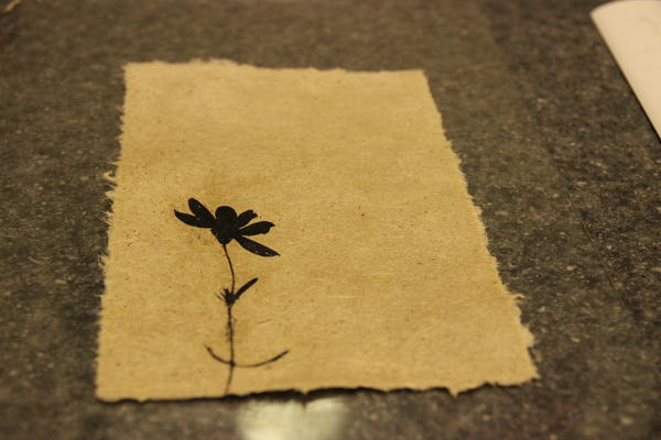 The finished piece: prairie coreopsis on garlic mustard paper.