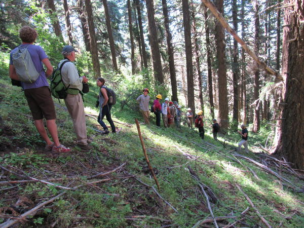 Staffers from the Medford office of the Bureau of Land Management and members of the Applegate Valley community tour a proposed timber thinning project on Bald Mountain.