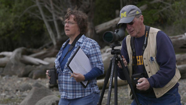 <p>Citizen scientists Sue Ehler and Matt Kerschbaum noticed white pelicans one one of their routine counts of herons on Padilla Bay in Puget Sound.</p>