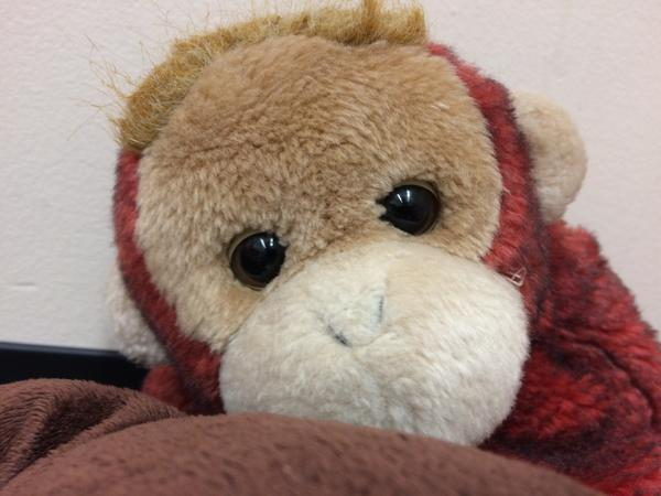 "This monkey lives in Miss Terrie's Cozy Corner where, according to 5-year-old Madison, ""you hug him, like this, if you want to make him real, but he's not real yet."""