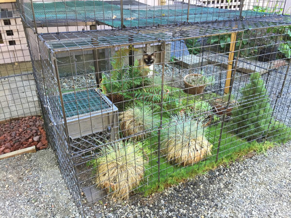 <p>Catios are enclosed outdoor patios that keep cats safe while also protecting backyard wildlife.</p>