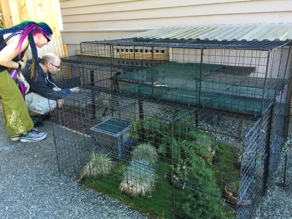 <p>Stanley Held built his catio using tent stakes, cable ties and metal mesh squares often sold as shelving for dormitories.</p>