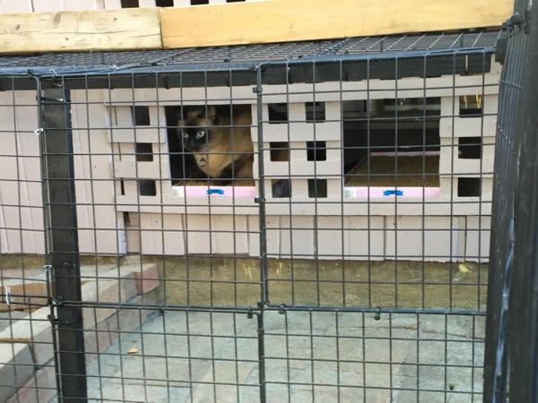 <p>Catios can be used to help transition stray cats to a new home.</p>