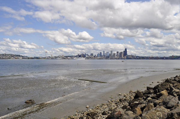 Four pairs of urbanized and less-developed shorelines in and around Seattle were sampled for a study that examined the effects of urbanization on marine diversity.