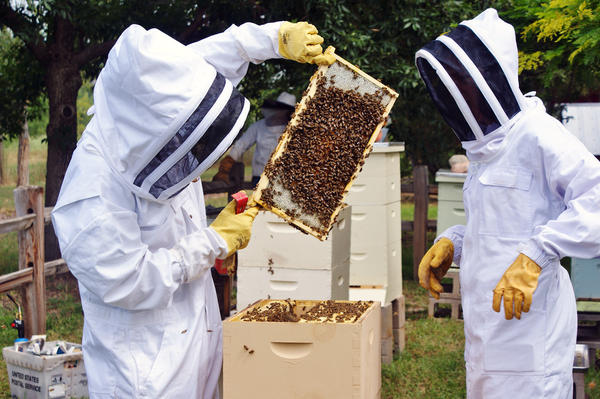 Beekeepers inspect bee frames at the Hudson Gardens community apiary near Littleton, Colo. Modeled after community gardens, community apiaries allow beekeepers to maintain hives in public spaces — and offer each tips and support.
