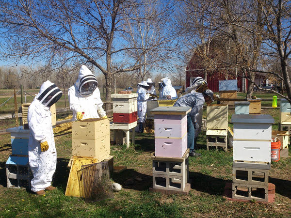 The community apiary at Hudson Gardens, near Littleton, Colo., was established in 2009. Beekeepers must go through an application process. Instead of a fee, members agree to tend the pollinator garden and participate in at least four outreach programs to educate visitors about honeybees.