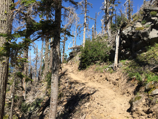 <p>The U.S. Forest Service recently completed a new route across Eliot Creek that reconnects a longstanding gap in the Timberline Trail.</p>