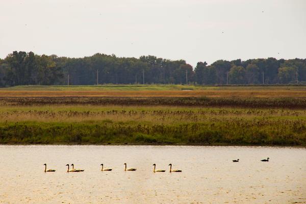 Wetlands at Shiawassee National Wildlife Refuge