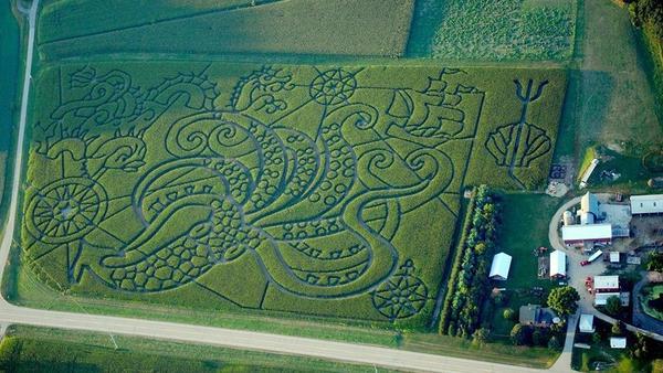 "Treinen Farm's 2013 Kraken maze was full of lots of ""tenterrific"" places to get lost."