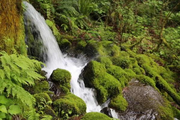 The Nestle Corporation hopes to bottle water from Oxbow Springs in Cascade Locks, Oregon.