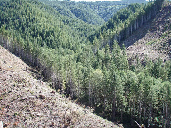 Buffers of trees near streams are now left on forest lands in Oregon to provide cooling shade and woody debris that protect fisheries.
