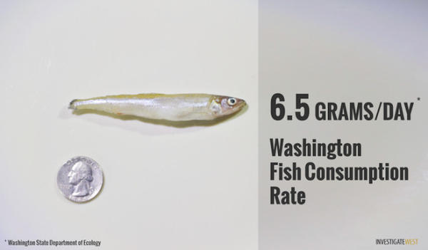<p>An illustration of the amount of fish that could be safely consumed each day under Washington's fish consumption standards before the adoption of more stringent water-quality rules.</p>