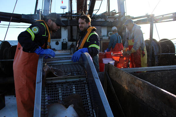 Marine scientists and fishermen gathered data more than two years before construction of the Block Island Wind Farm and two years during construction. The research will continue for two years of the wind farm's operation.