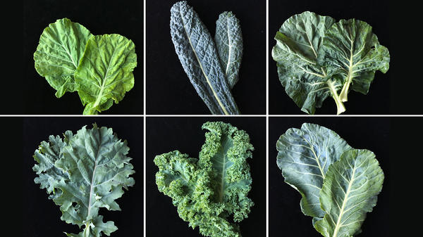 "To develop a new variety of kale tailored to American palates, plant researchers are surveying consumer attitudes on the leafy green. Study participants took home the six varieties of kale pictured. The takeaway so far? ""Be less like kale."""
