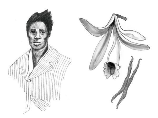 "Slave Edmond Albius and a vanilla plant: ""Vanilla is here thanks to a 12-year-old slave who figured out a botanical secret no one else knew,"" Lohman writes."