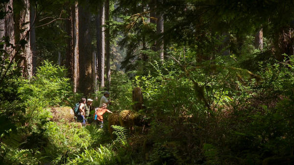 <p>A group of veterans deal with stress and other conditions that resulted from their military service by hiking together in Olympic National Park and its neighboring forestlands.</p>