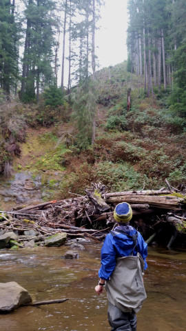 <p>A landside is visible in front of a clearcut on the horizon.  Trees and branches from the slide have been snagged by wood added to the river by the Coos Watershed Association, creating salmon habitat.</p>