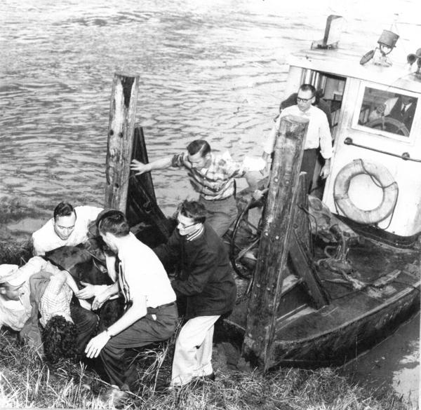 Rescuers pull Judy's mother onto shore on Dec. 24, 1956. Harold Hogue is in the foreground with the white shirt, dark pants and watch.