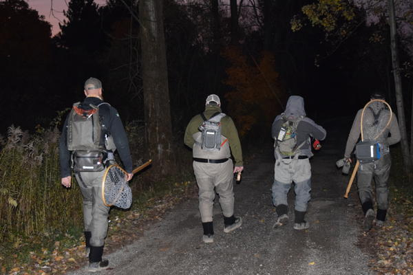 A group of anglers walks to Elk Creek
