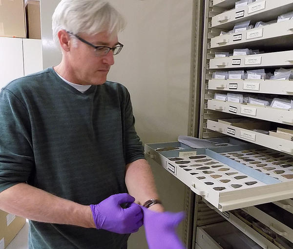 Peter Lape shows off some stone points at the Burke Museum in Seattle. Lape has the delicate balancing act of keeping Kennewick Man's bones safe for both science and Native Americans who want to rebury the remains.
