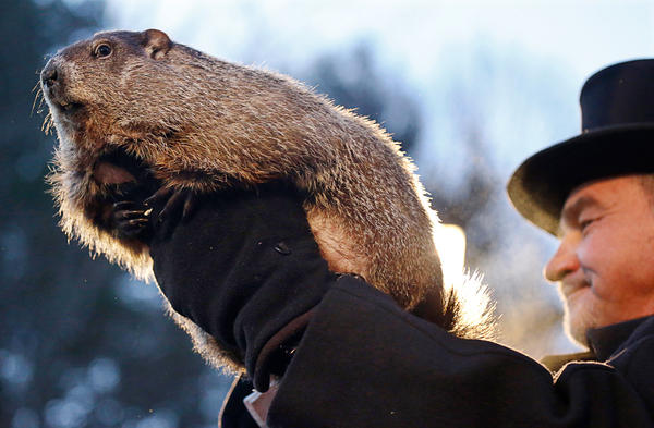 Groundhog Club co-handler John Griffiths holds Punxsutawney Phil during the annual celebration of Groundhog Day on Gobbler's Knob in Punxsutawney, Pa.