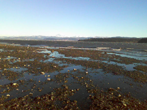 <p>Low tide at Portage Bay in Washington's Whatcom County.</p>
