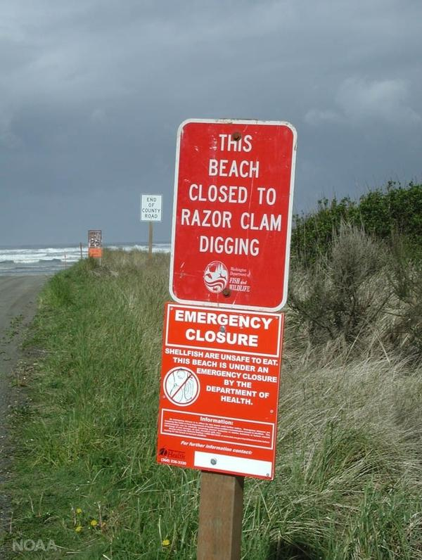A sign warning beach goers against digging for razor clams along the coast of Washington state