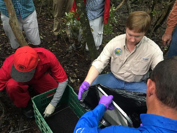 Florida Agriculture Commissioner Adam Putnam helps clean out a sterile screwworm fly release site in the Keys.