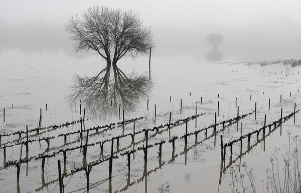 Vineyards remain flooded in the Russian River Valley in Forestville, Calif., on Monday. A massive storm system stretching from California into Nevada saw rivers overflowing their banks, flooded vineyards and forced people to evacuate their homes after warnings that hillsides previously parched by wildfires could give way to mudslides.