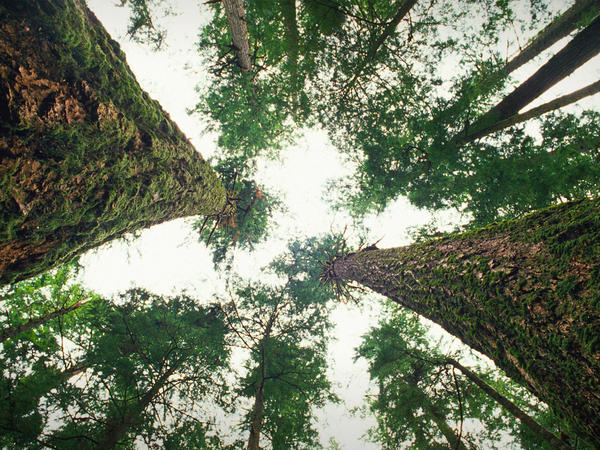 Trees can't talk — or can they? Ecologist Suzanne Simard says tree communicate with each other in a unique way.